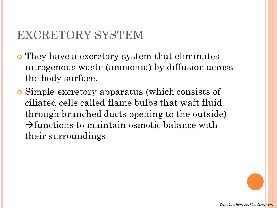 EXCRETORY SYSTEM They have a excretory system that eliminates nitrogenous waste (ammonia) by diffusion across the body surface.