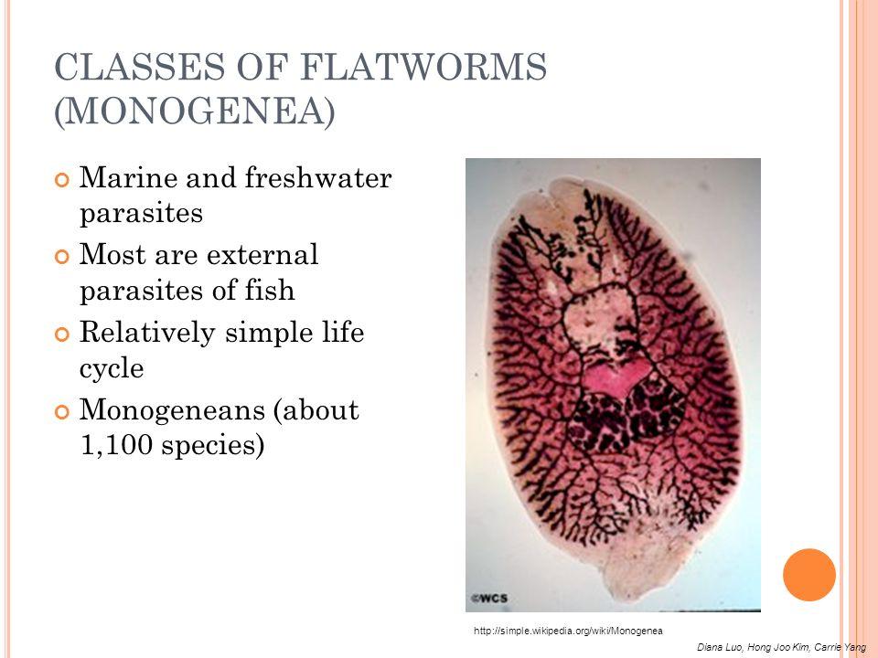 CLASSES OF FLATWORMS (MONOGENEA)