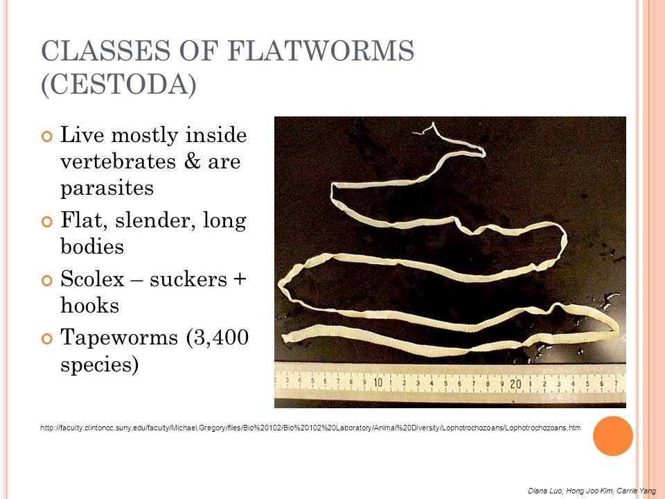 CLASSES OF FLATWORMS (CESTODA)