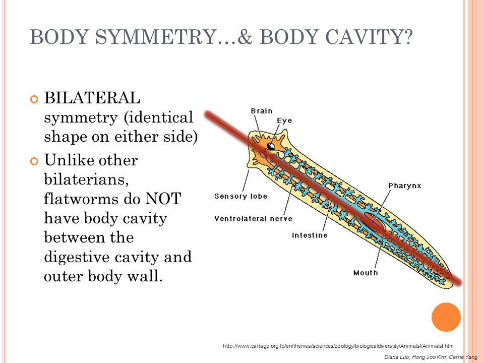 BODY SYMMETRY…& BODY CAVITY
