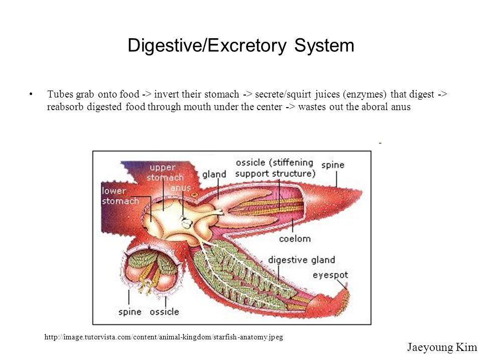 Digestive/Excretory System