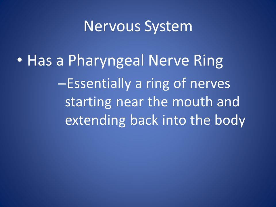 Has a Pharyngeal Nerve Ring