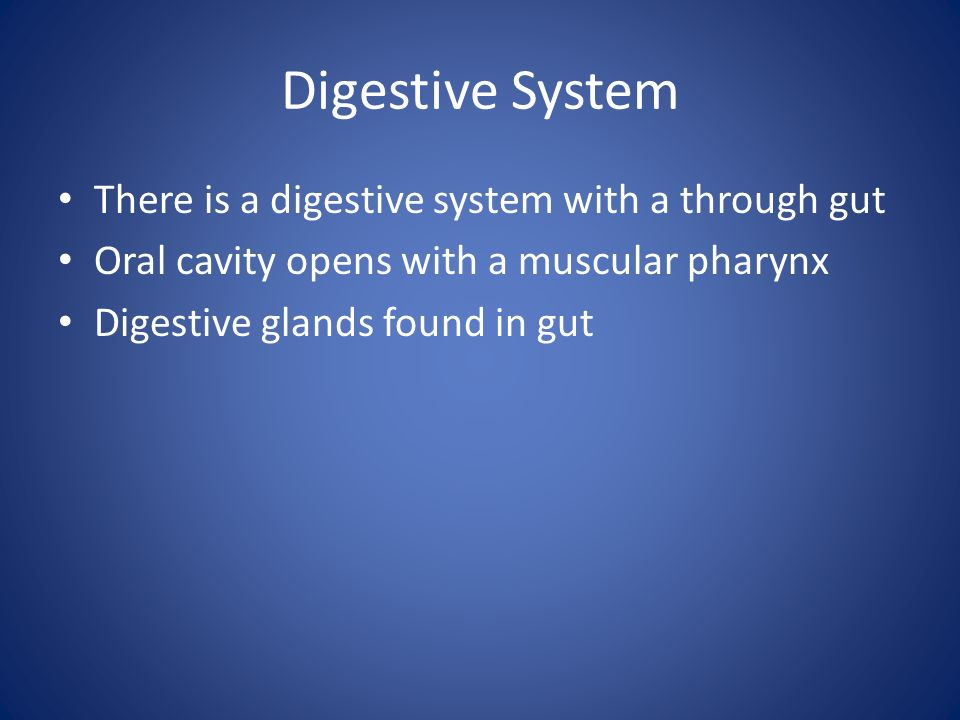 Digestive System There is a digestive system with a through gut