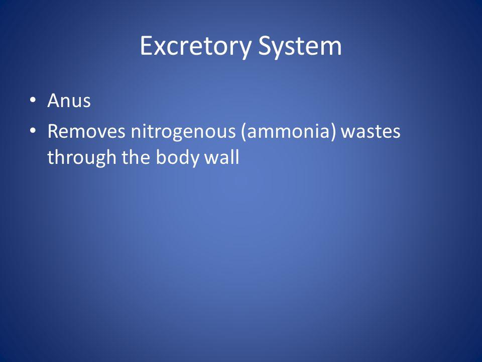 Excretory System Anus Removes nitrogenous (ammonia) wastes through the body wall