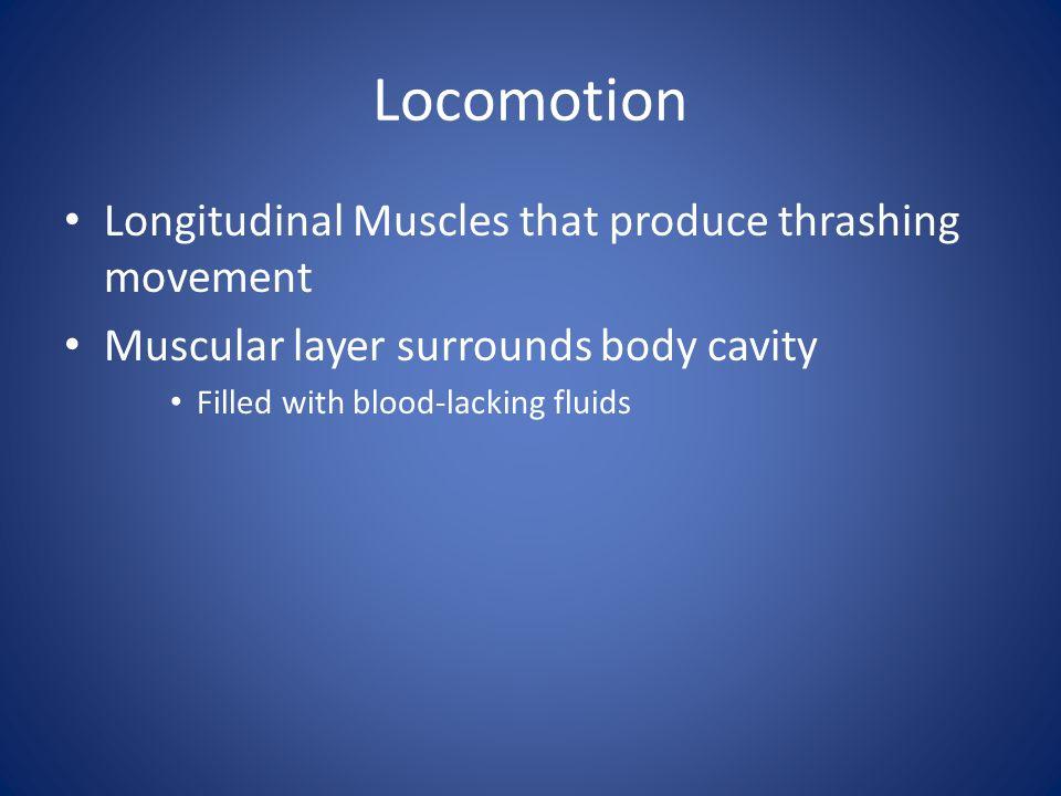 Locomotion Longitudinal Muscles that produce thrashing movement