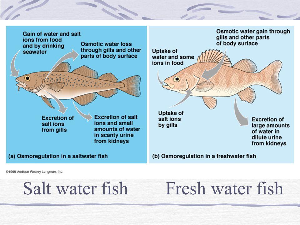 Salt water fish Fresh water fish