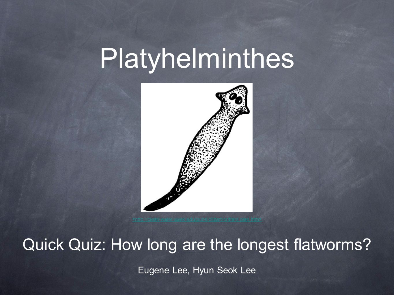 Platyhelminthes Quick Quiz: How long are the longest flatworms