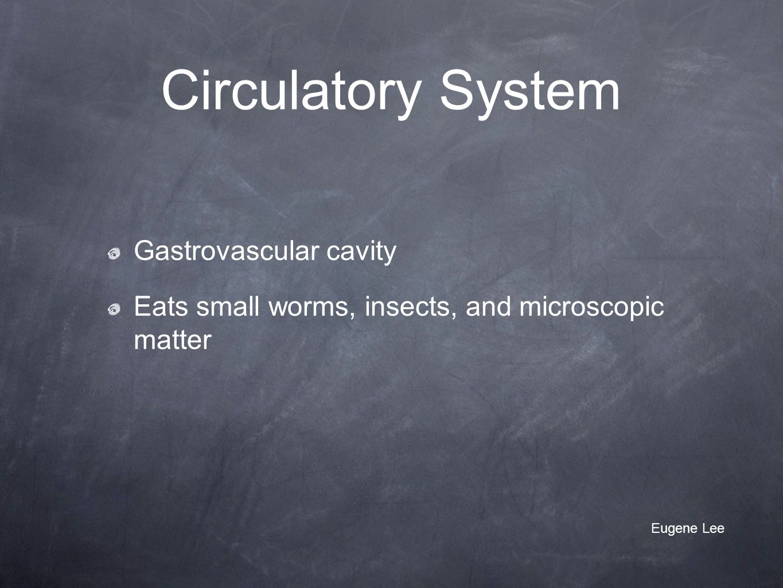 Circulatory System Gastrovascular cavity