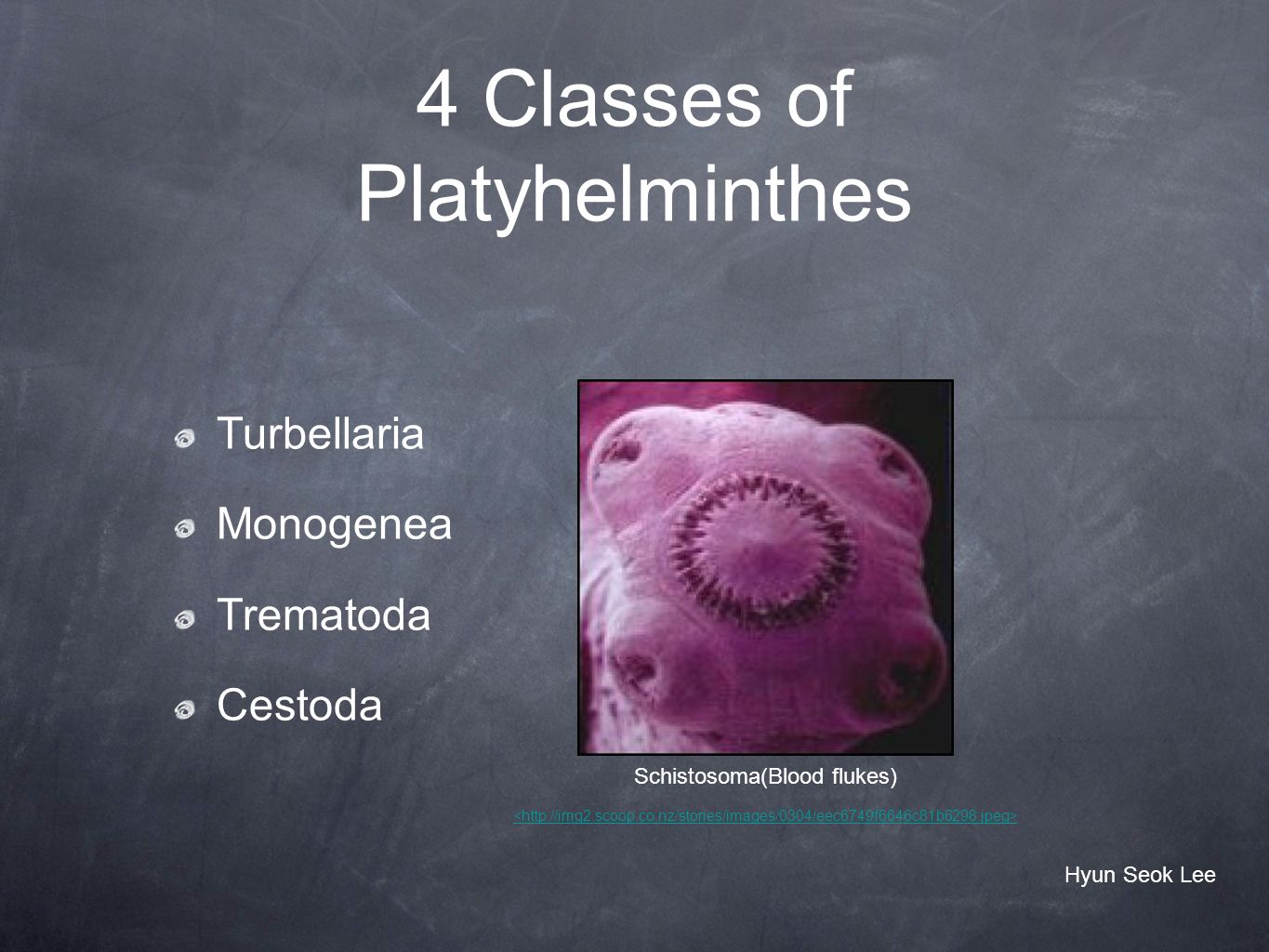 4 Classes of Platyhelminthes