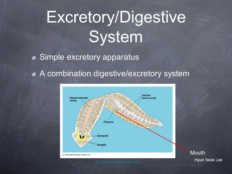 Excretory/Digestive System