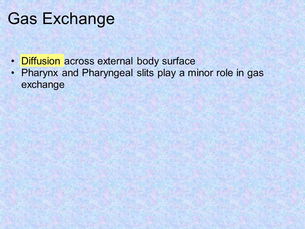 Gas Exchange Diffusion across external body surface