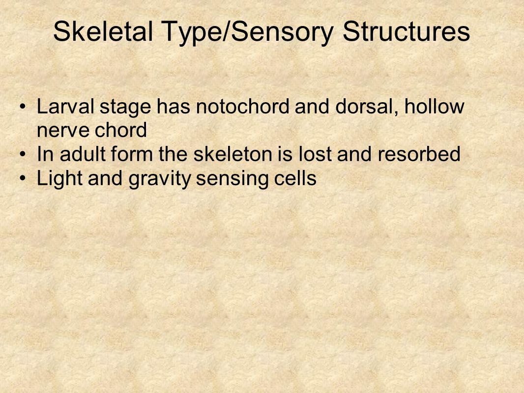 Skeletal Type/Sensory Structures