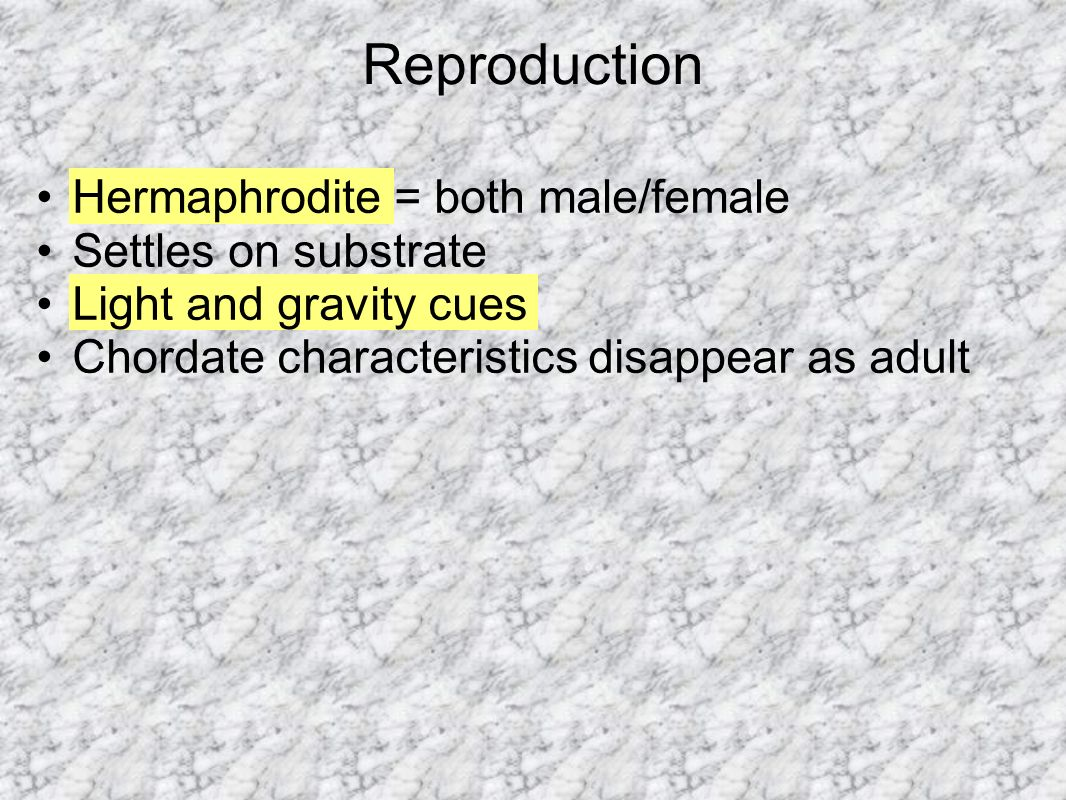 Reproduction Hermaphrodite = both male/female Settles on substrate