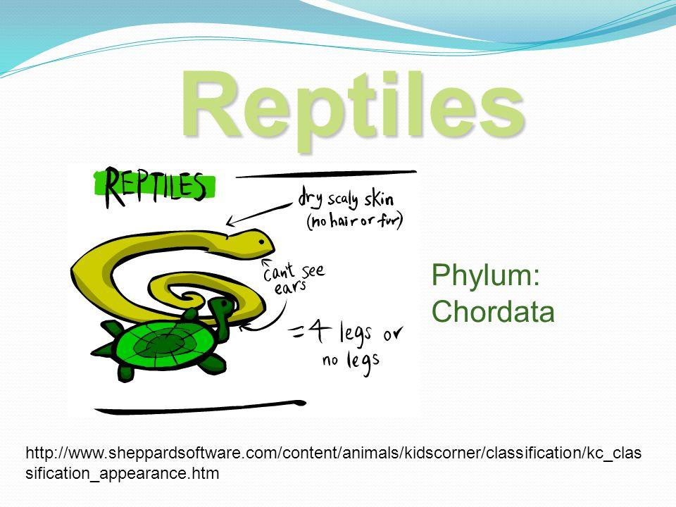 Reptiles Phylum: Chordata