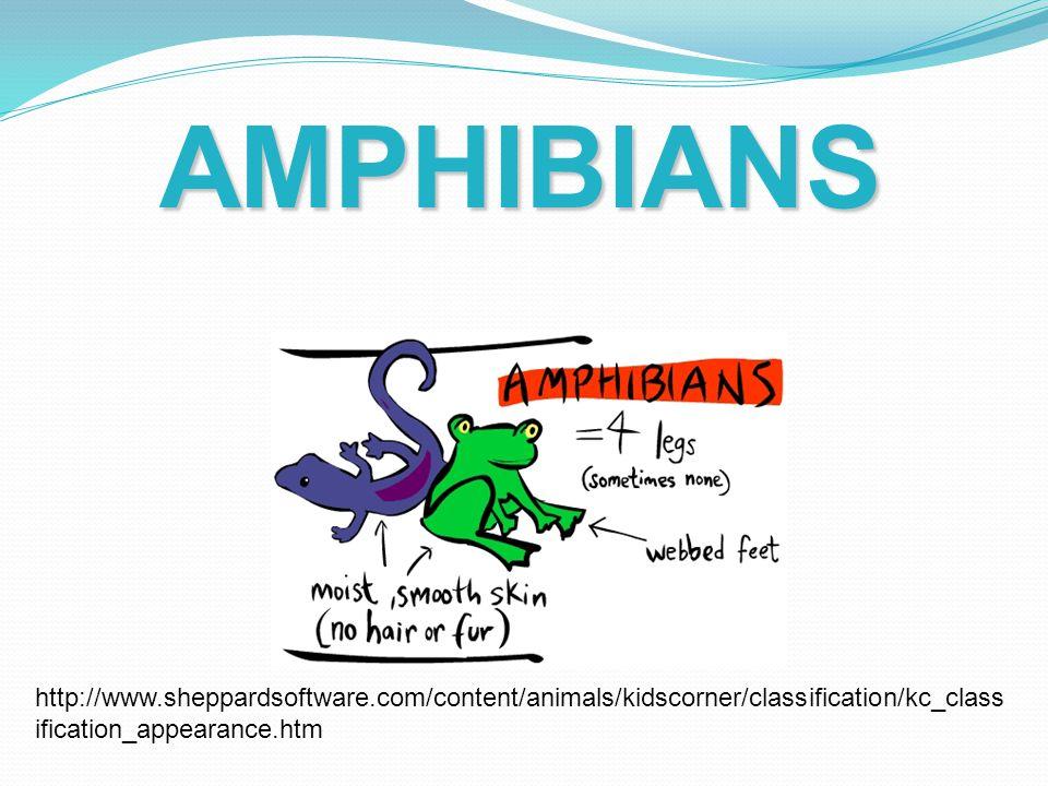 AMPHIBIANS http://www.sheppardsoftware.com/content/animals/kidscorner/classification/kc_classification_appearance.htm.