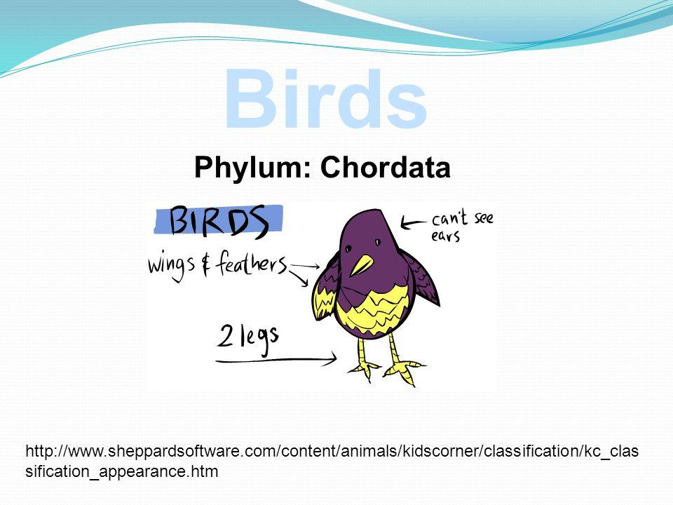Birds Phylum: Chordata
