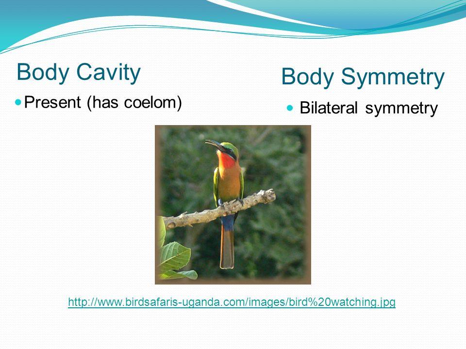 Body Cavity Body Symmetry Present (has coelom) Bilateral symmetry