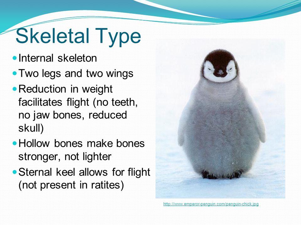 Skeletal Type Internal skeleton Two legs and two wings