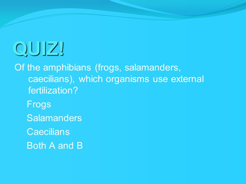 QUIZ! Of the amphibians (frogs, salamanders, caecilians), which organisms use external fertilization