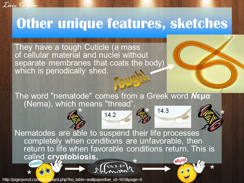 Other unique features, sketches