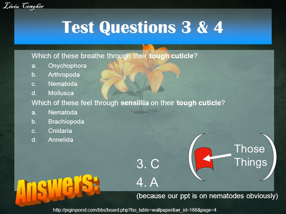 Test Questions 3 & 4 Answers: 3. C 4. A Those Things Liviu Cengher