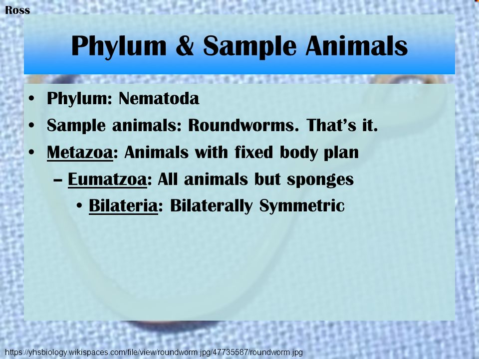 Phylum & Sample Animals