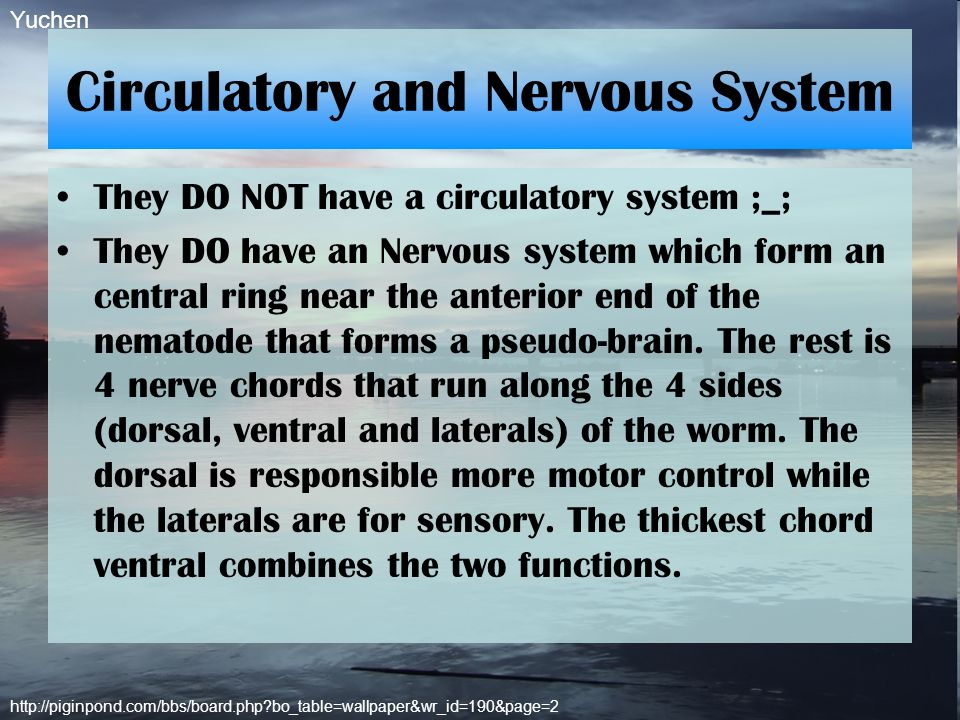Circulatory and Nervous System