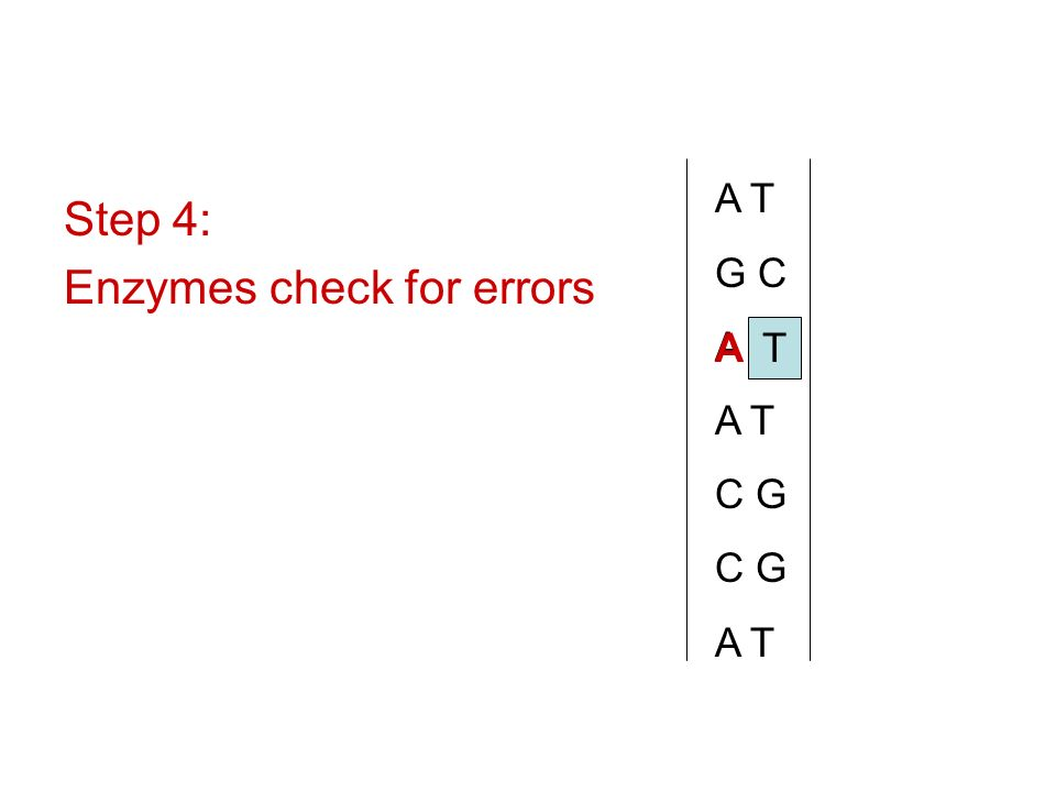 Enzymes check for errors