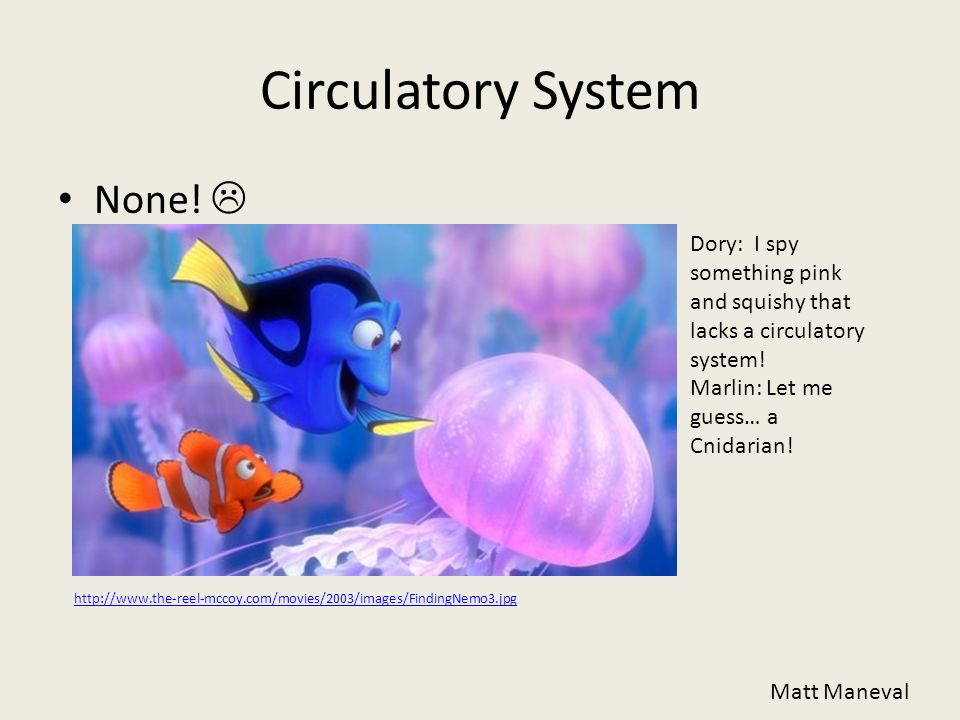Circulatory System None! 