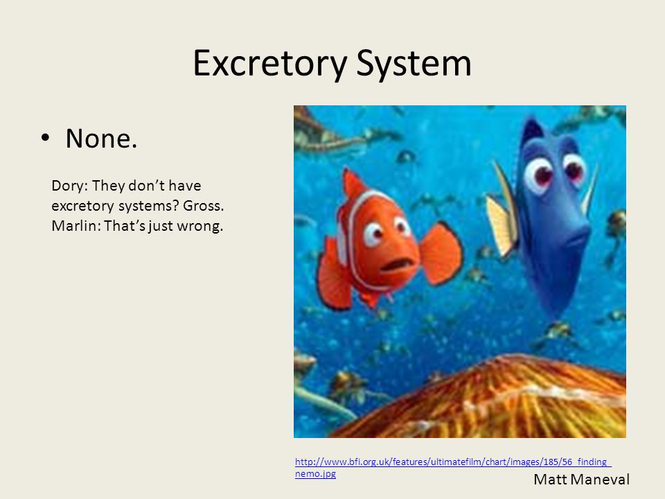 Excretory System None. Dory: They don't have excretory systems Gross.