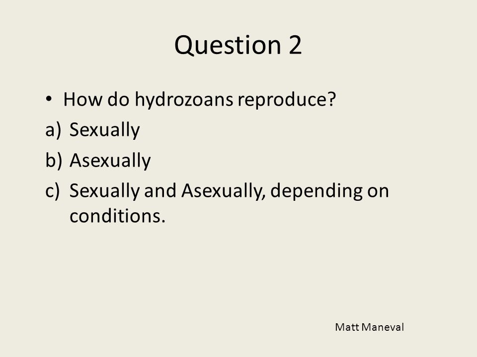 Question 2 How do hydrozoans reproduce Sexually Asexually