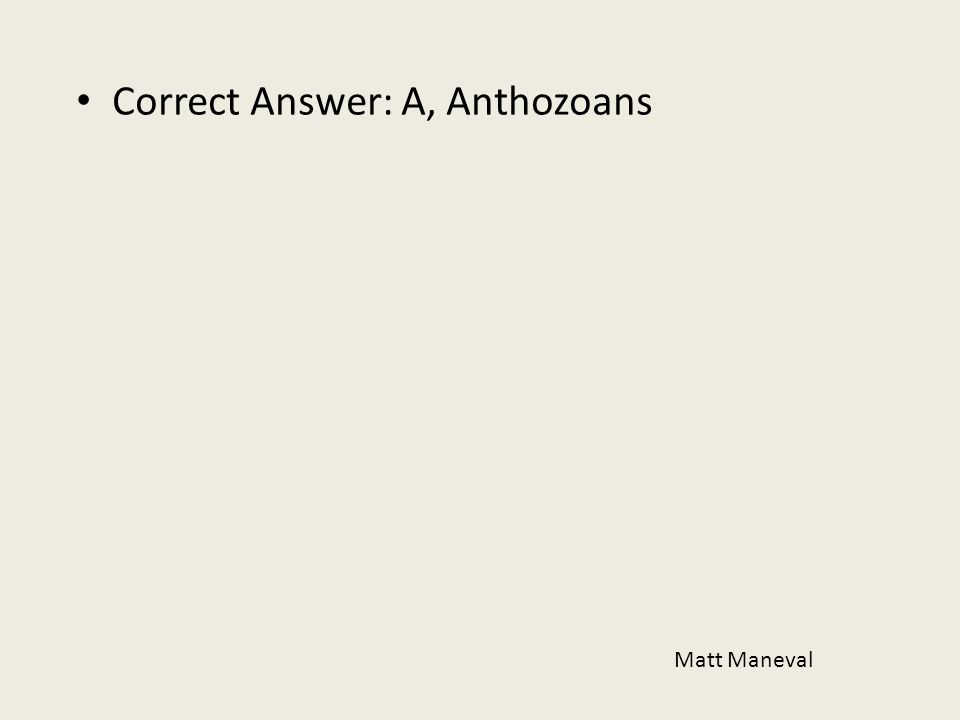 Correct Answer: A, Anthozoans
