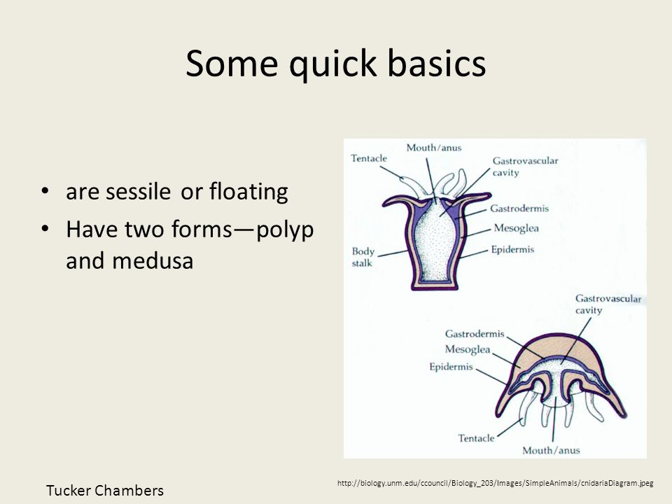 Some quick basics are sessile or floating