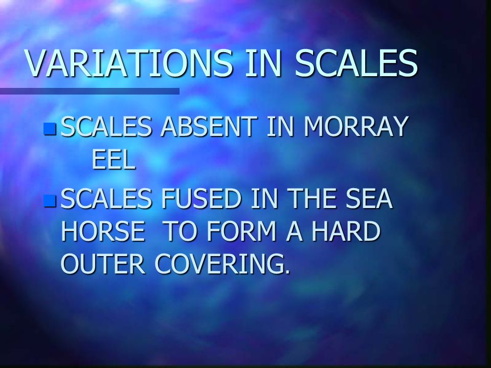 VARIATIONS IN SCALES SCALES ABSENT IN MORRAY EEL