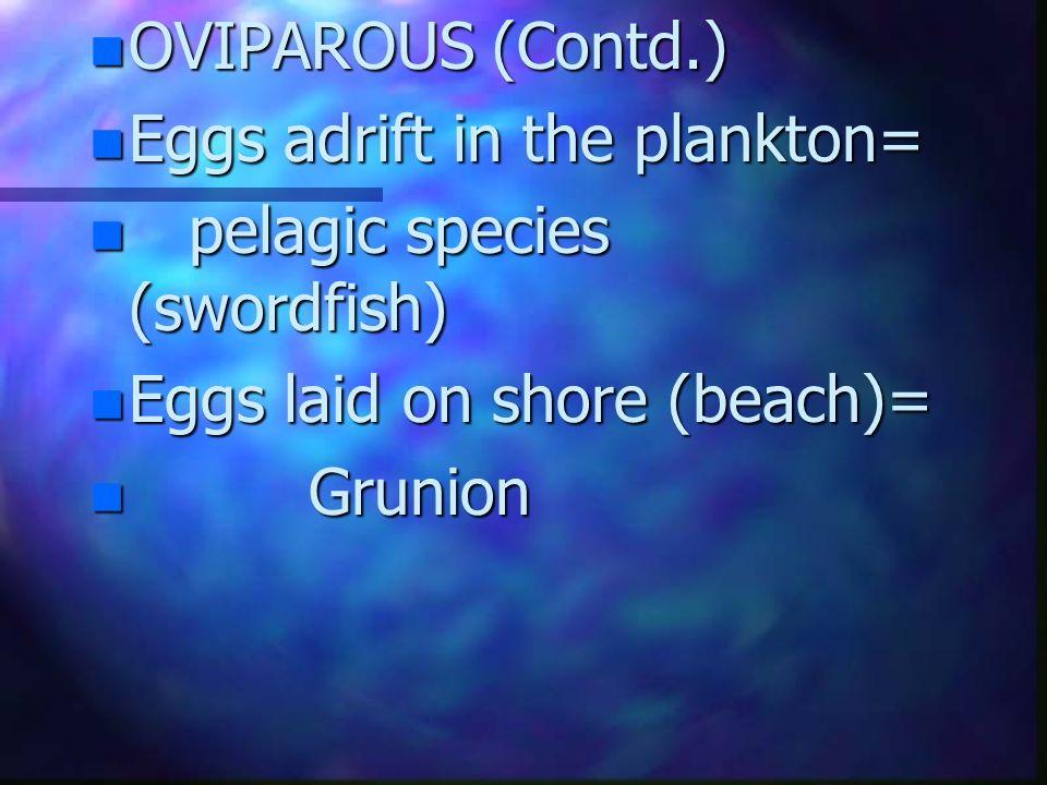 OVIPAROUS (Contd.) Eggs adrift in the plankton= pelagic species (swordfish) Eggs laid on shore (beach)=