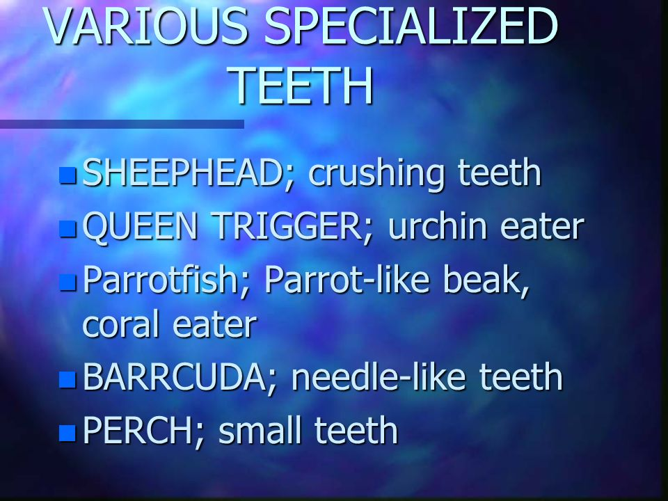 VARIOUS SPECIALIZED TEETH