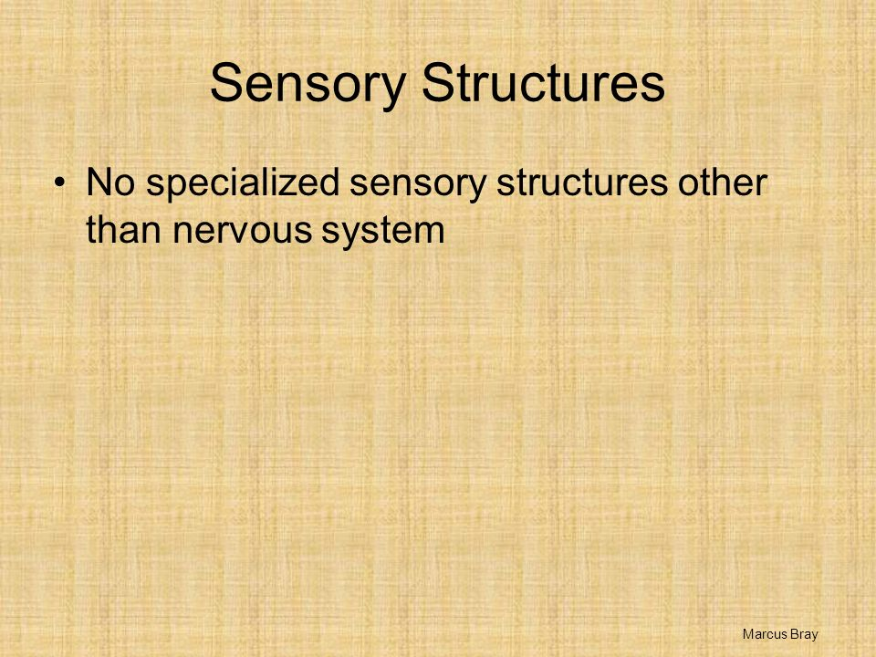 Sensory Structures No specialized sensory structures other than nervous system Marcus Bray