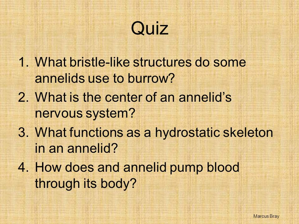 Quiz What bristle-like structures do some annelids use to burrow