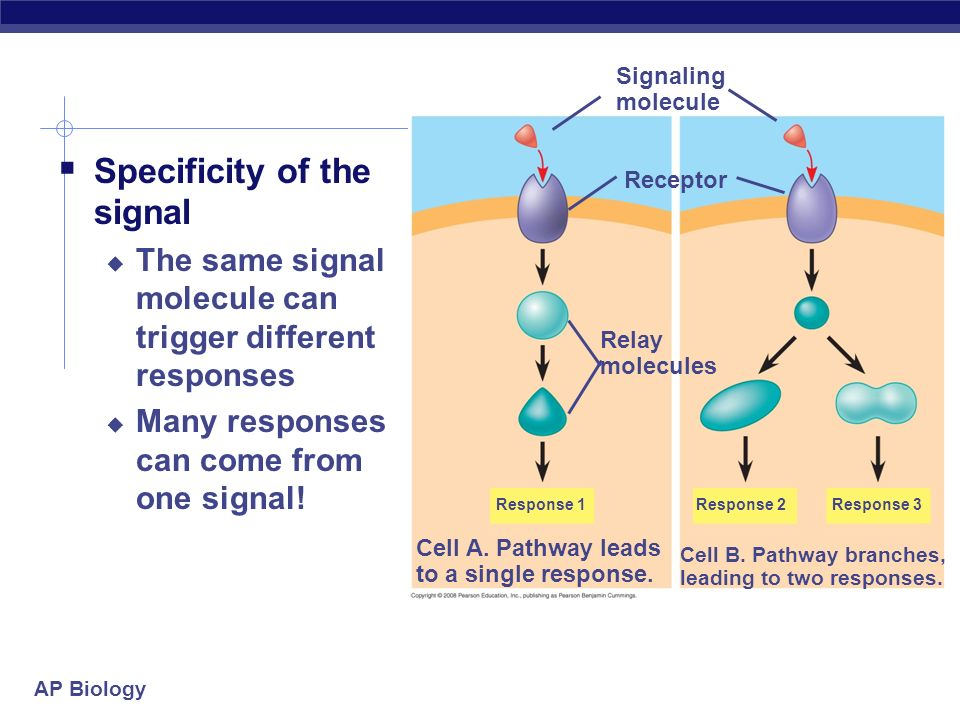 Specificity of the signal