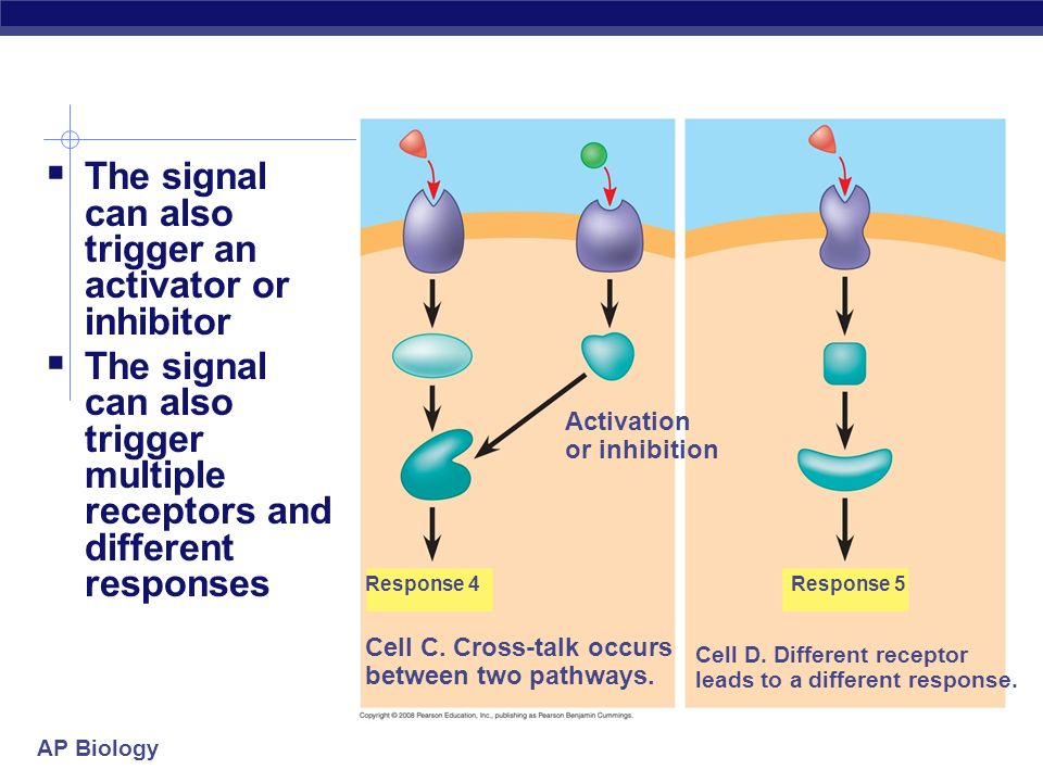 The signal can also trigger an activator or inhibitor