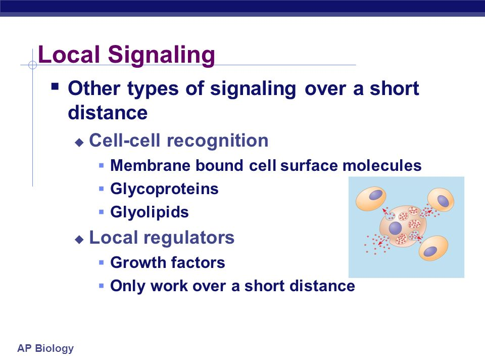 Local Signaling Other types of signaling over a short distance