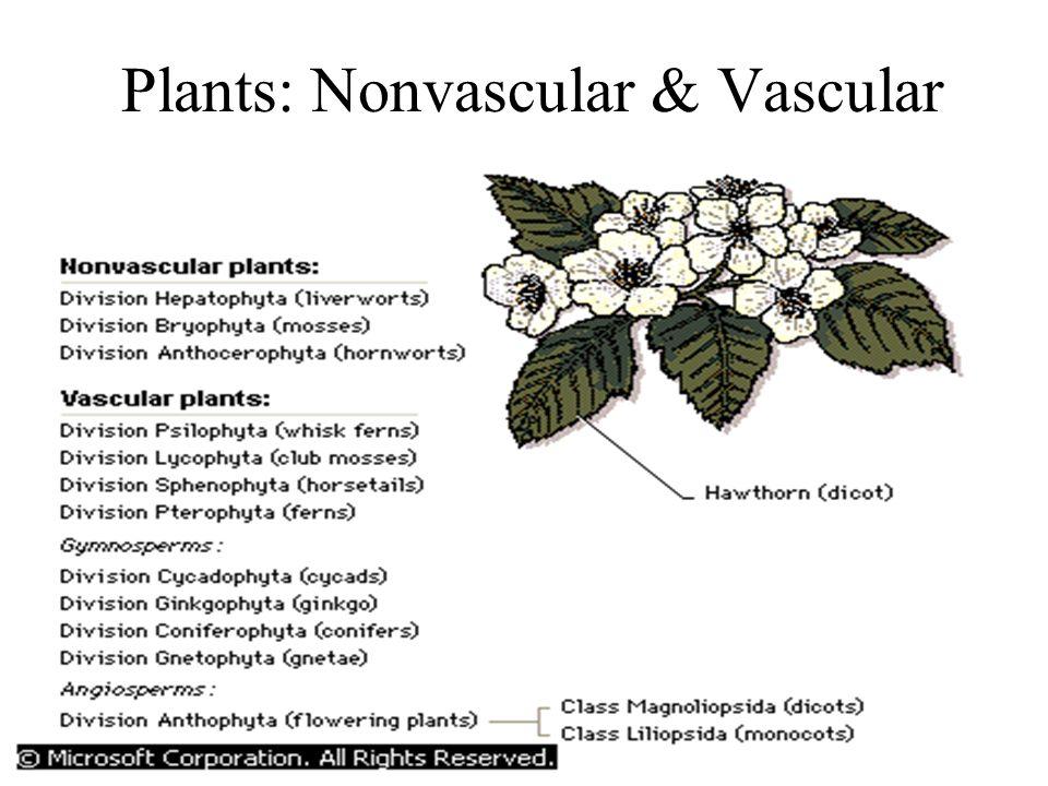 Plants: Nonvascular & Vascular