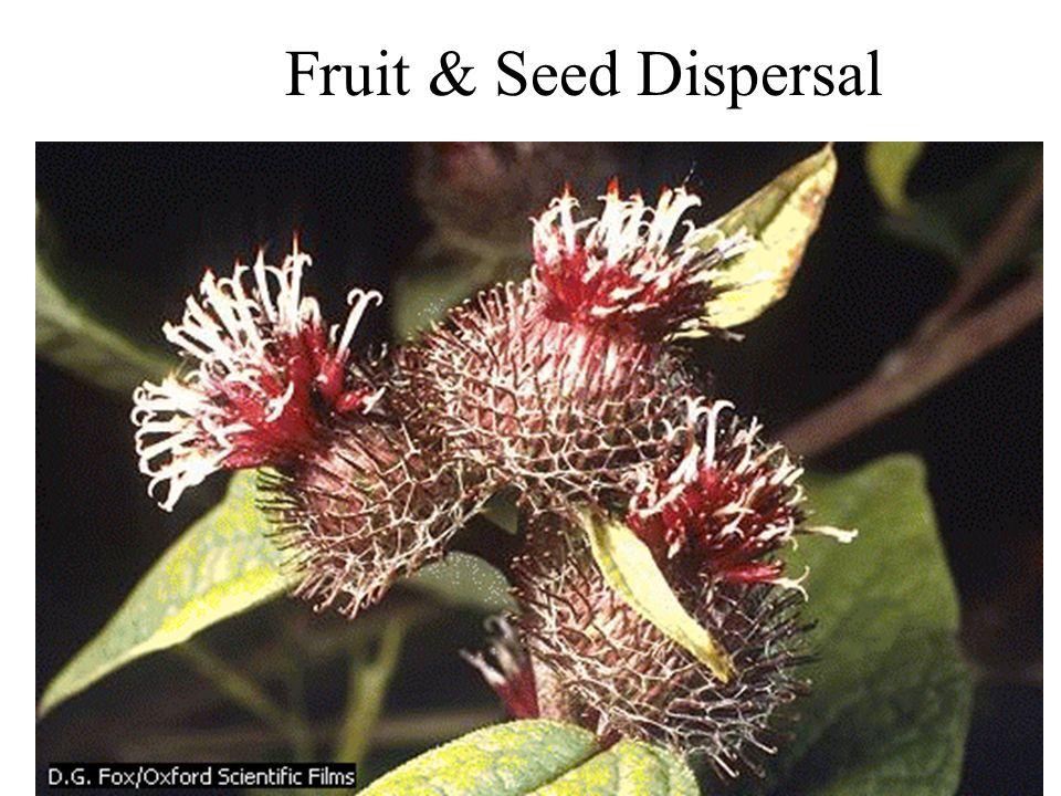 Fruit & Seed Dispersal