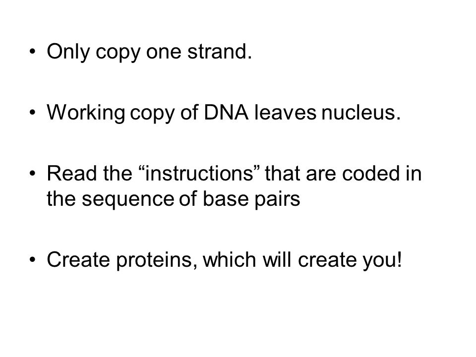 Working copy of DNA leaves nucleus.