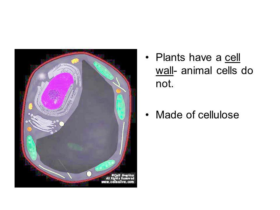 Plants have a cell wall- animal cells do not.