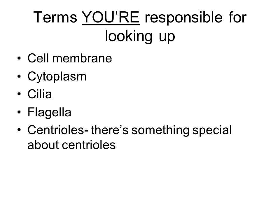 Terms YOU'RE responsible for looking up