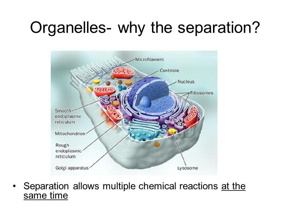 Organelles- why the separation