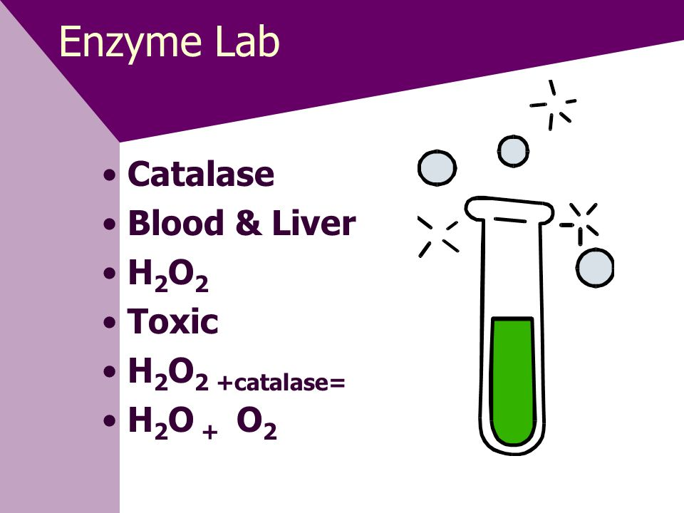 Enzyme Lab Catalase Blood & Liver H2O2 Toxic H2O2 +catalase= H2O + O2
