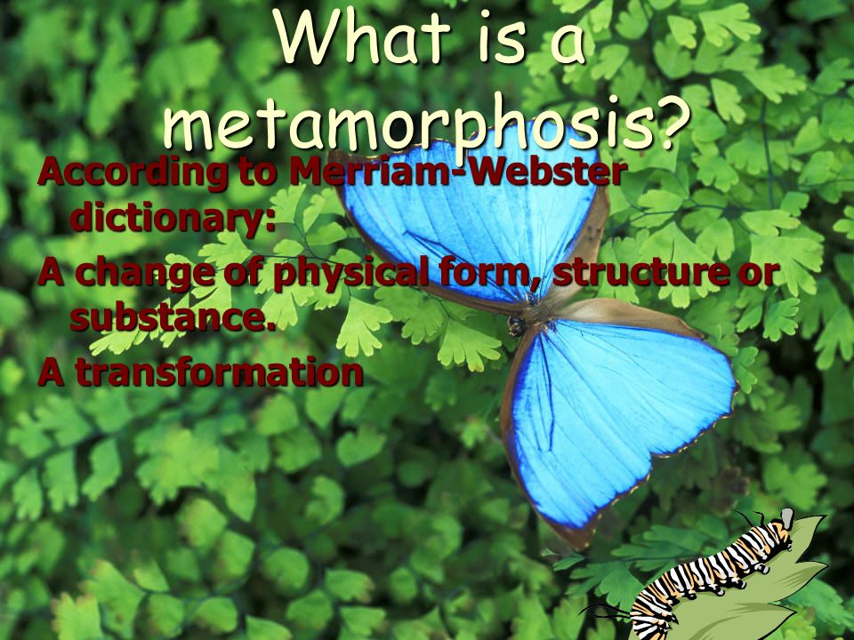 What is a metamorphosis