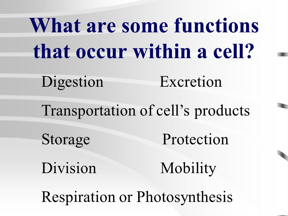 What are some functions that occur within a cell
